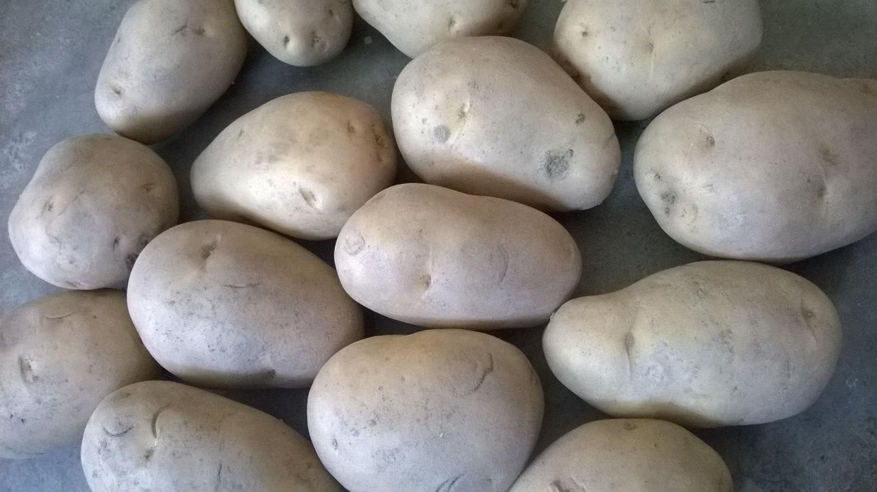 Hello dear,  as u interested for buying fresh Chipsona potato with export quality so  plz check the below information..  Latest price is 8.5 rs per kg with all extra expenses.... Minimum quantity is for order 20 ton....  truck freight is extra based on transport and total distance....   So if you interested for trade with us, then contact with us anytime...