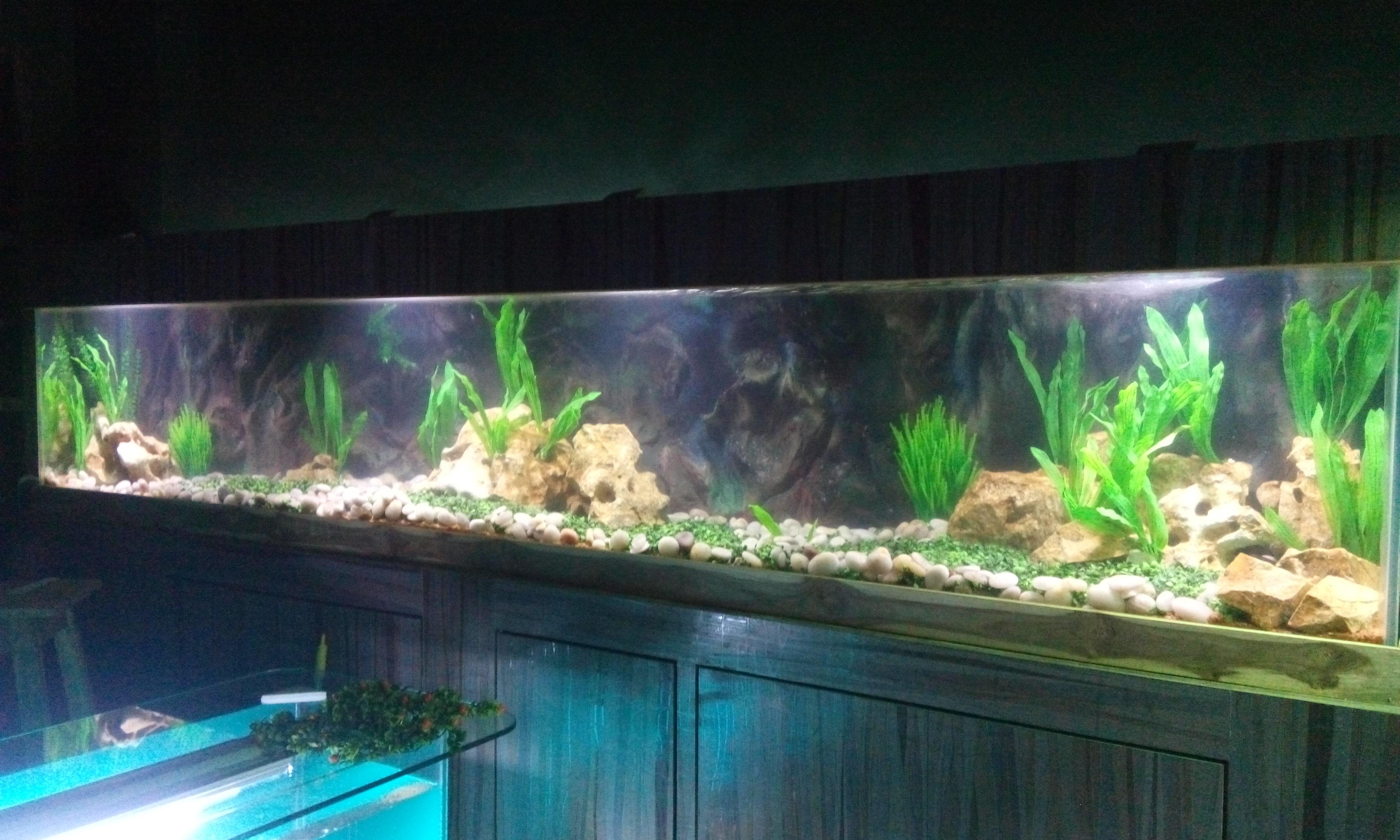 Hi, This is a leading aquarium company