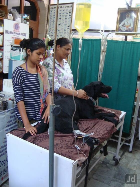 Pet Clinic in Panchkula is being serving the pet population of try city for the last 25 years with utmost dedication and sincerity and is one of the best veterinary doctor in panchkula. It is being run by a team of dedicated veterinary professionals under the inspirational leadership of  Dr. S.C Aneja is a senior veterinary consultant with 25 years of experience in the field of veterinary medicine and is a master in the diagnosis of tick borne and skin diseases. reproduction and ultrasound consultant in providing latest diagnostic and surgical facilities to pet patients. Our Services include:      Pet Treatment based on latest diagnostics     Vaccination     All kinds of Lab Investigations     All kinds of surgeries incl. elective surgeries (Spaying and Castration)     Orthopaedic Surgery (Bone Pining and Plating)     Anti Tick     X-Ray     ECG [Digital]     Pulse Oximetry     State of the Art Operation Theatre & Gas Anaesthesia     Critical Care Unit     Ultrasonic Dental Scaling     Dog Bath and Grooming     Pet Accessories Incl. dog food and snacks     Vaginal cytology & canine infertility treatment     Dog Eye care     Hair care     Pet Ultrasound     Pet Surgery  Dog Clinic is the best veterinary clinics in panchkula when it comes to pets care or medical help to your pet. We strive to give our pet patients the best veterinary treatment and take all botheration away from their owners for their wellbeing. Facilities like emergency critical care, Dog Eye Care, Dog Ultrasound, dog surgery, Dog Colour Doppler Echocardiography are our specialities.