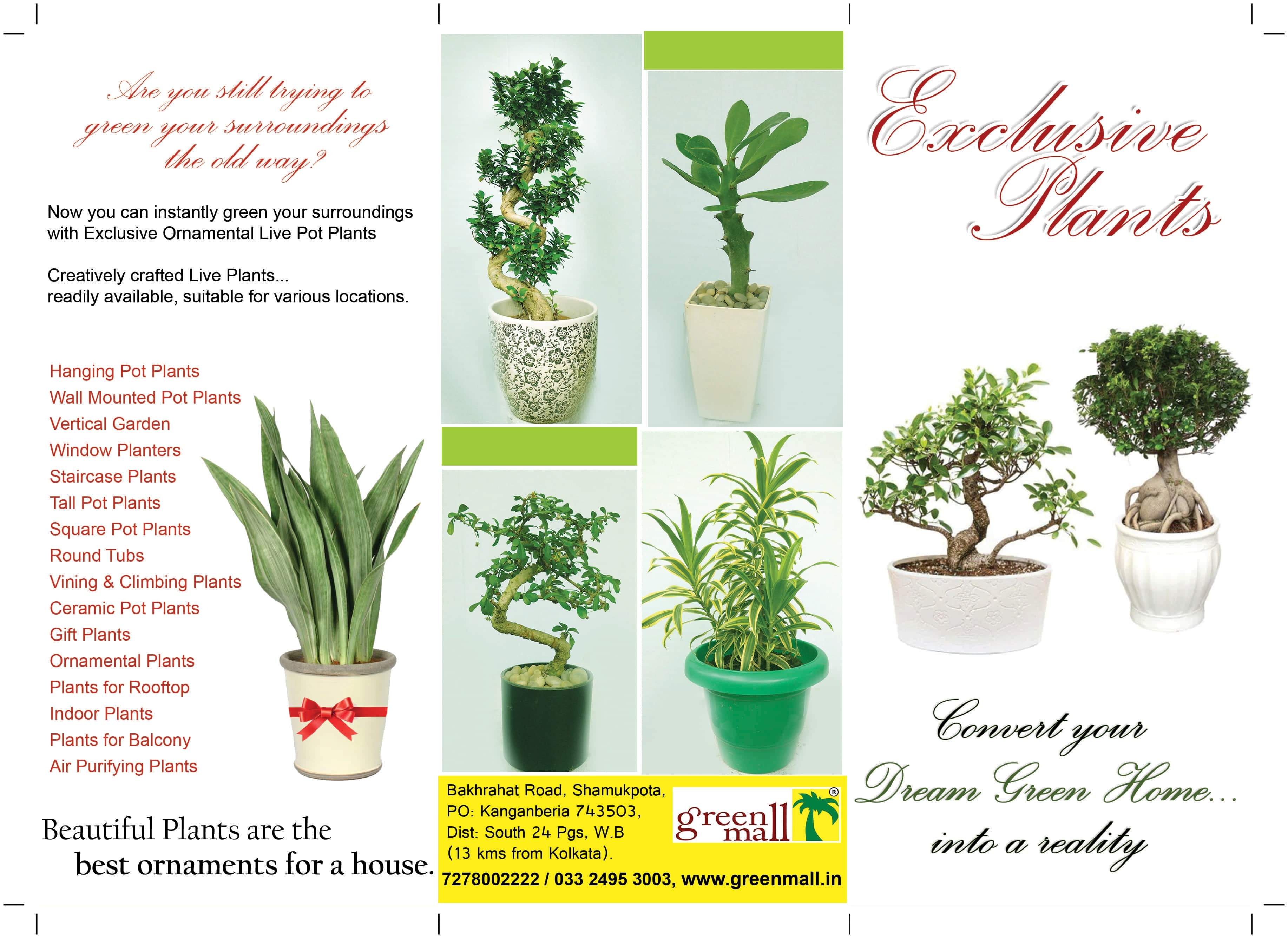 100 the best air purifying plants the 10 best plants to for Best air purifying plants for bedroom