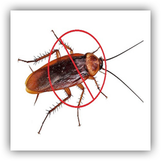 Our firm is counted as one of the frontrunners in providing best pest control services from our side. We are involved in offering qualitative Cockroach Control services which helps in preventing microbiological activities in grains. We provide our best cockroach control services at industry leading prices. Our cockroach control services are very effective as we make best use of latest and advanced technology while delivering our services. We offer our Cockroach Control services at the most economical prices. Cockroaches can usually be found in damp and moist spaces that have dirt, food and water. Kitchens and bathrooms are the most popular haunts for cockroach infestation. Cockroach problems, especially in kitchens, should be dealt with immediately or they can become a health hazard.  We are leading services cockroach control in Bhavnagar, Gujarat