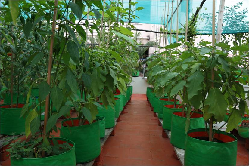No 1 Grow Bags Manufacturers In Coimbatore