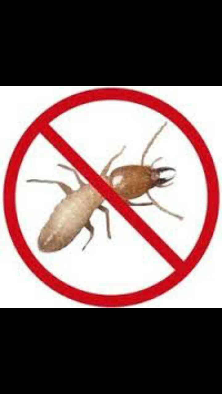 Pest Control Service for Termites for residential & commercial area.