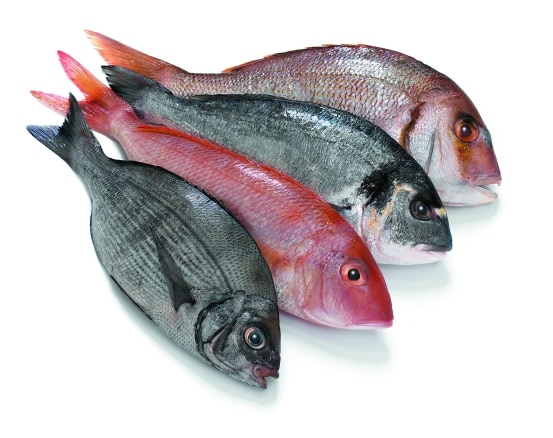 Sea Bream Suppliers in Chennai  We are supplying Sea Bream Fish and all other kinds of Sea Foods like Sea Beam Fish, Sea Foods Sea Bream Fish supplying.