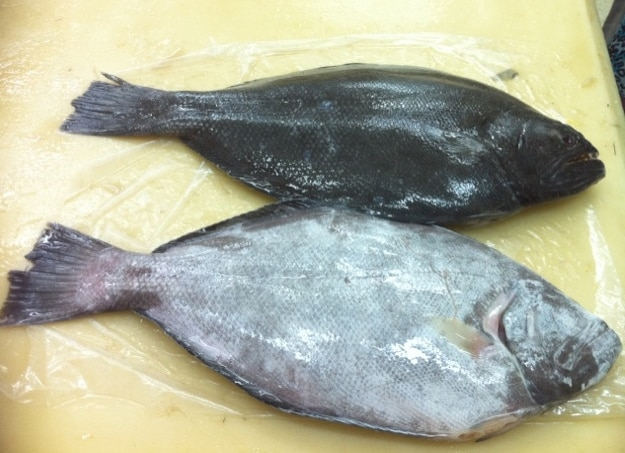 Indian Halibut Suppliers in Chennai  We are supplying Indian Halibut  Fish and all other kinds of Sea Foods like Indian Halibut  Fish, Sea Foods Indian Halibut  Fish supplying.