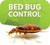 Bed Bugs Control in Chennai  Our Bed Bugs Treatments are very peculiar that are closely associated with human bedding as the name implies. best Bed Bugs Control In chennai
