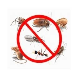 Acme Dis infestation Service in Chennai  Are you looking for disinfestation Acme  pest control is the best services in chennai. WE offer a best quality to our Customers
