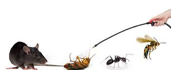 Dealing with few Pest will not solve the Pest problem entirely. We will help you out to solve Pest infestation. Call our Pest Control Expert for Pest free home. Our Pest Control professional are trained in Pest Control Services they will help you get rid of Pest. When you see few Pest rolling around in home there are many Pest hiding inside before Pest become headache for your family. Contact our Pest Control professional to remove Pest we are providing Best Pest Control to make your home Pest free. We make sure Pest Control Solution provided by our Pest Control team is effective to eradicate Pest from your residence. Reach us for Herbal Pest Control Solution.