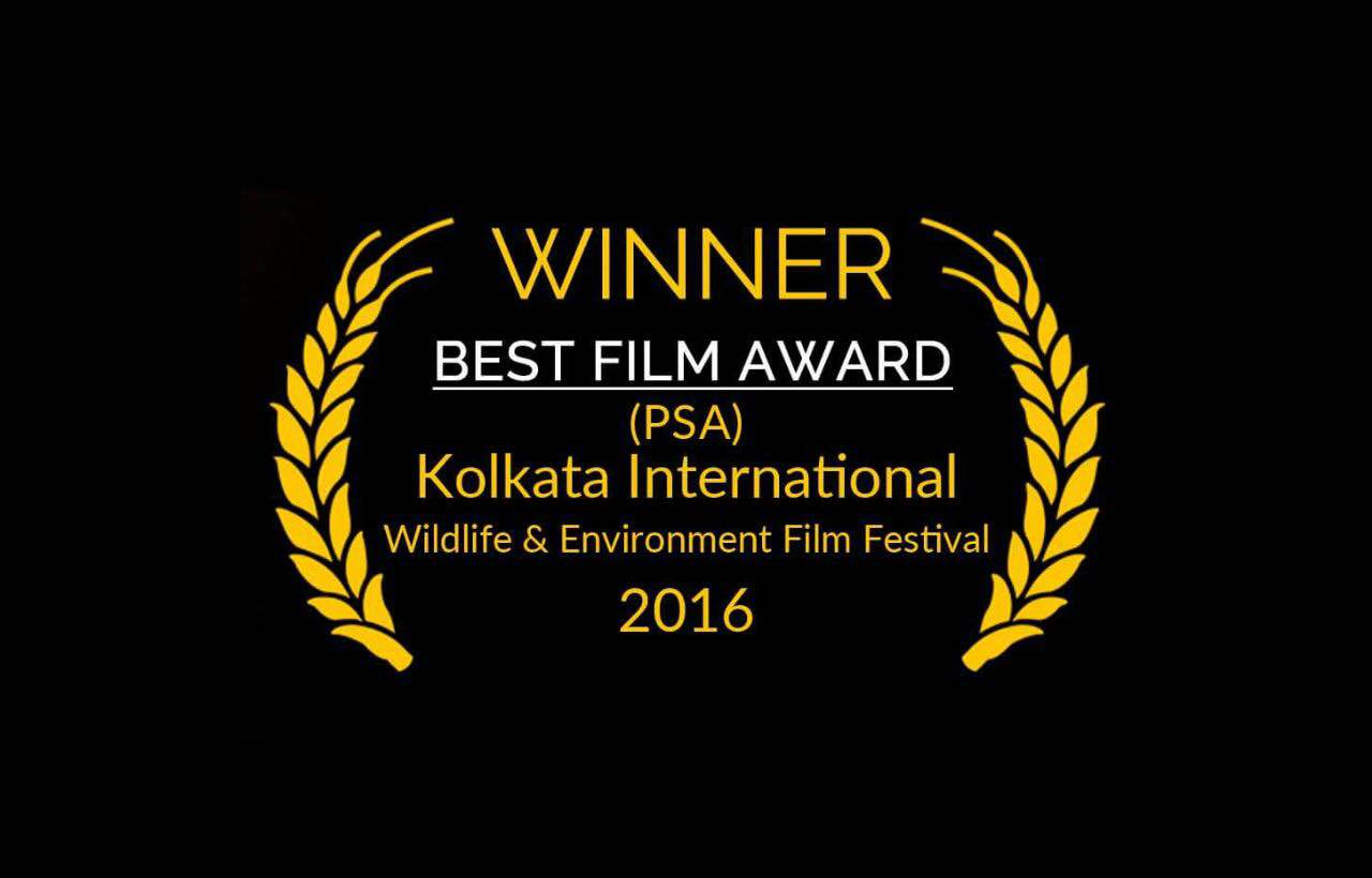 So the Winning Spree Continues.📽🎬🏆  Shortfilm by our student  'The Day After Ganpati Visarjan'   Won🏆*Best Film Award*  at  Kolkata International Wildlife & Environment Film Festival  in PSA Category.  #ajit sawant