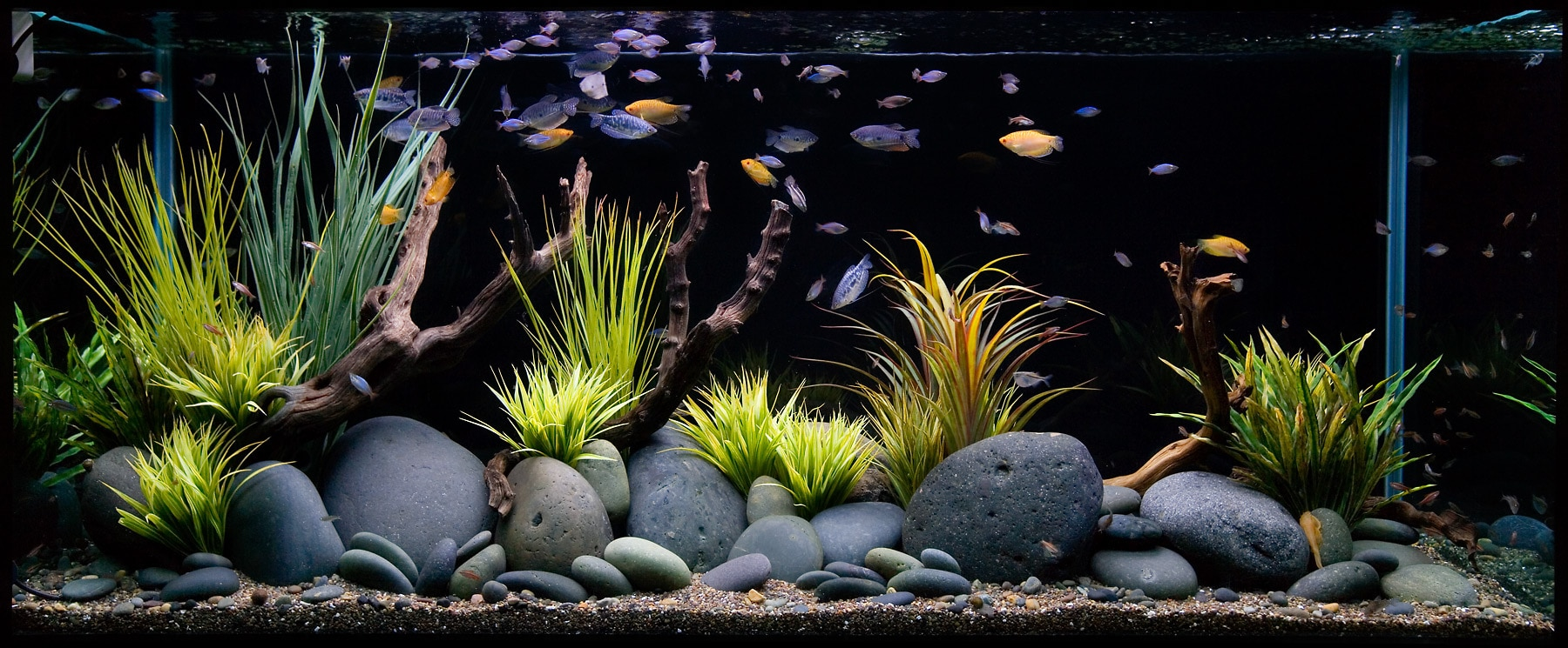 Fish aquarium just dial - Aquarium Shops In Hyderabad Aquariums In Hyderabad We Based In Hyderabad From Many Years
