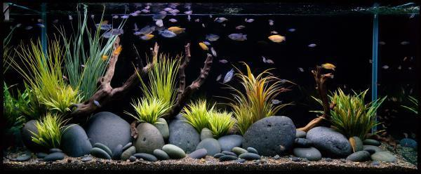 Aquarium shops in hyderabad, aquariums in hyderabad, we based in hyderabad from many years.