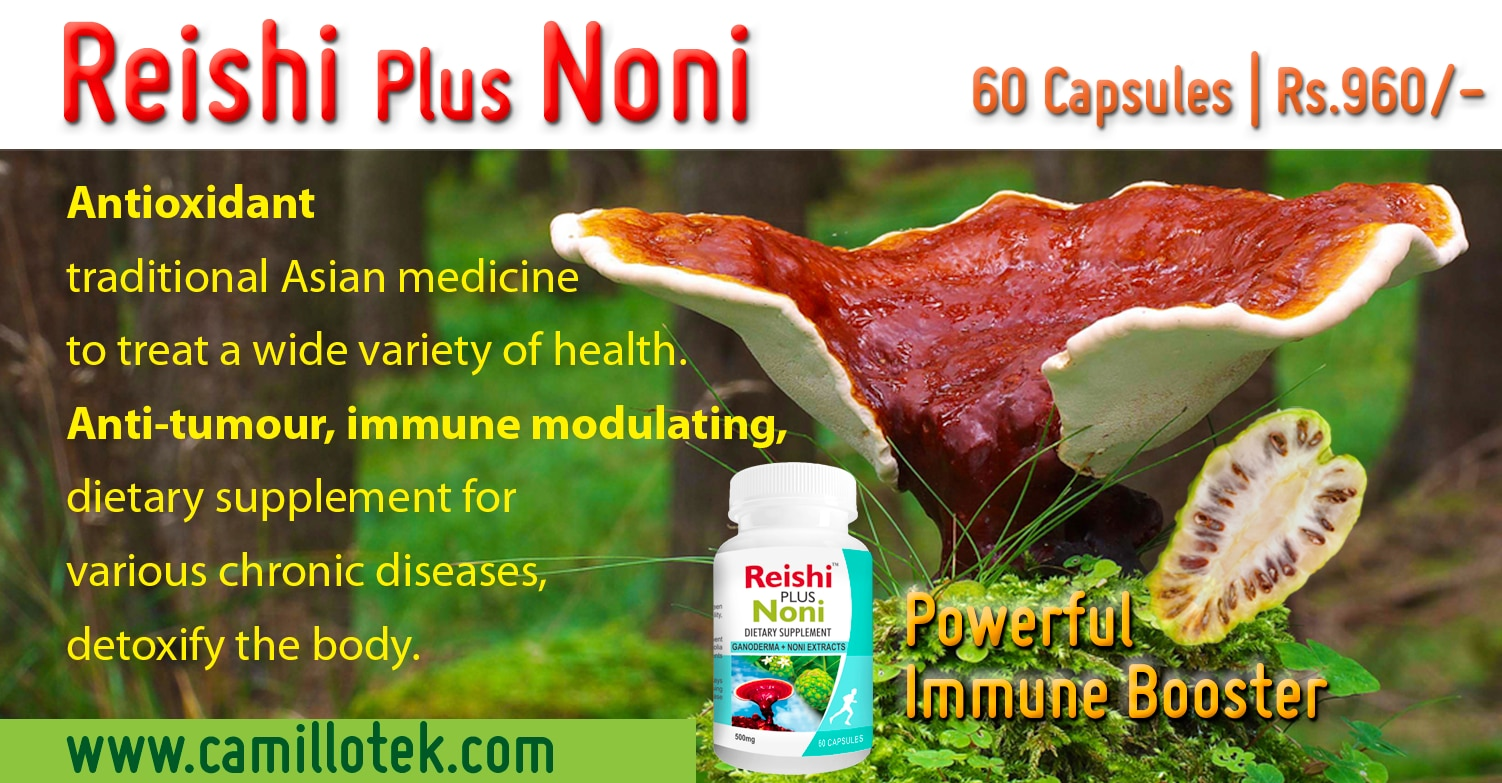 Red Reishi (Ganoderma lucidum) Ling Zhi in Chinese herbal mushroom, Reishi Mushroom, medicinal mushroom,  red reishi mushroom extract, supplement reishi mushroom, Health supplement 100% Reishi capsule, Reishi dietary supplements, Reishi nutritional supplements, Noni Capsules, noni supplements, Buy Noni capsules, best noni supplements, noni health supplement, Organic Noni, Morinda citrifolia Fruit supplements exporter, dealer, manufacturer in chenna, India.  Antioxidant traditional Asian medicine to treat a wide variety of health.  Anti-tumour, immune modulating, dietary supplement for various chronic diseases, detoxify the body.  Ability to stimulate brain neurons.