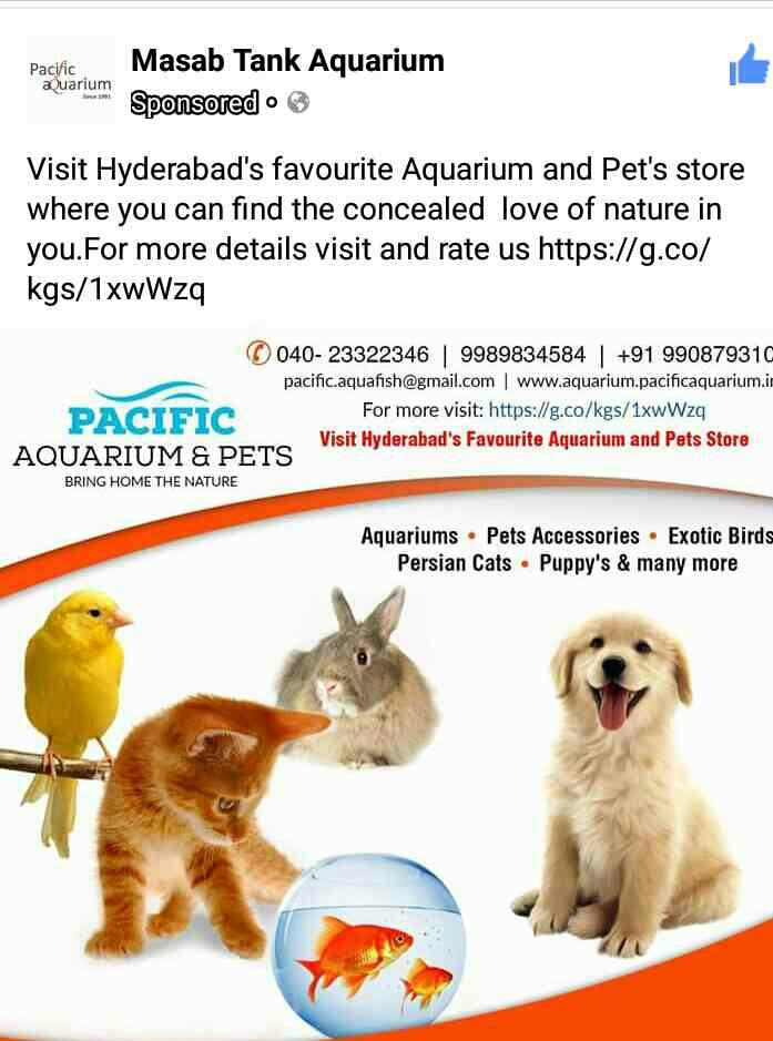 Hello everyone , and welcome to the store at  Pacific Aquarium and pets at rd no 1 Banjarahills Masbtank Hyderabad .  first of its kind of store in Hyderabad city with a complete variety of pets spread over an area of 2000 sqft in the heart of the city.  Our collection includes  Aquariums  Aquarium supplies, accessories, live fishes.electronic gadgets  exotic and regular birds  birds and their food cages etc kittens and their necessities puppy's with  good quality and health and all puppy's accessories etc.  learn the maintenance of Ur pets in an natural way .do what they like with out getting stressful.   for more details call us on 9989834584 9908793101.   04023322346 like us on Facebook at masabtank Aquarium ..