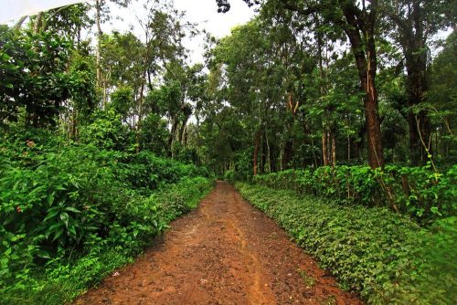 Exploring the Lush Green Countryside & Magnificent Hills of Coorg on a Cycle  http://www.thebetterindia.com/79871/cycle-lush-green-countryside-coorg-photo-essay/  Karnataka's Coorg region is well-known for its abundant flora and fauna.