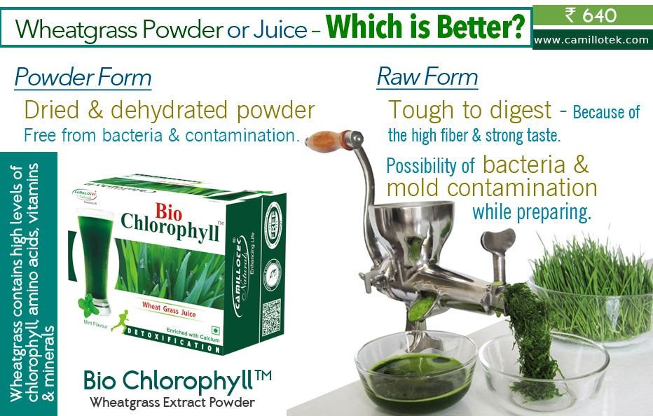 Wheatgrass contains high levels of chlorophyll, amino acids, vitamins and minerals. It helps to build RBC with the high quantities of chlorophyll (70%) and improves energy.  Organic Certified Wheatgrass Powder, powder wheat grass, wheatgrass powder with mint flavour, Fresh Wheatgrass Juice, benefits of wheatgrass, powdered wheatgrass in juice, Get Wheatgrass Juice powder, wheatgrass supplement, Wheatgrass Superfood Supplements, Buy Wheatgrass powder online, Pure Organic Wheat Grass Powder.  Wheatgrass Powder or Juice – Which is Better? In raw form wheatgrass is tough to digest because of the high fiber and strong taste.  In raw form possibility of bacteria and mold contamination while preparing as juice.  Dried and dehydrated Wheatgrass powder free from bacteria and contamination.