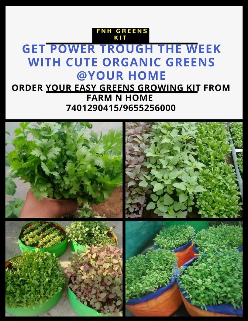 Organic Greens kit