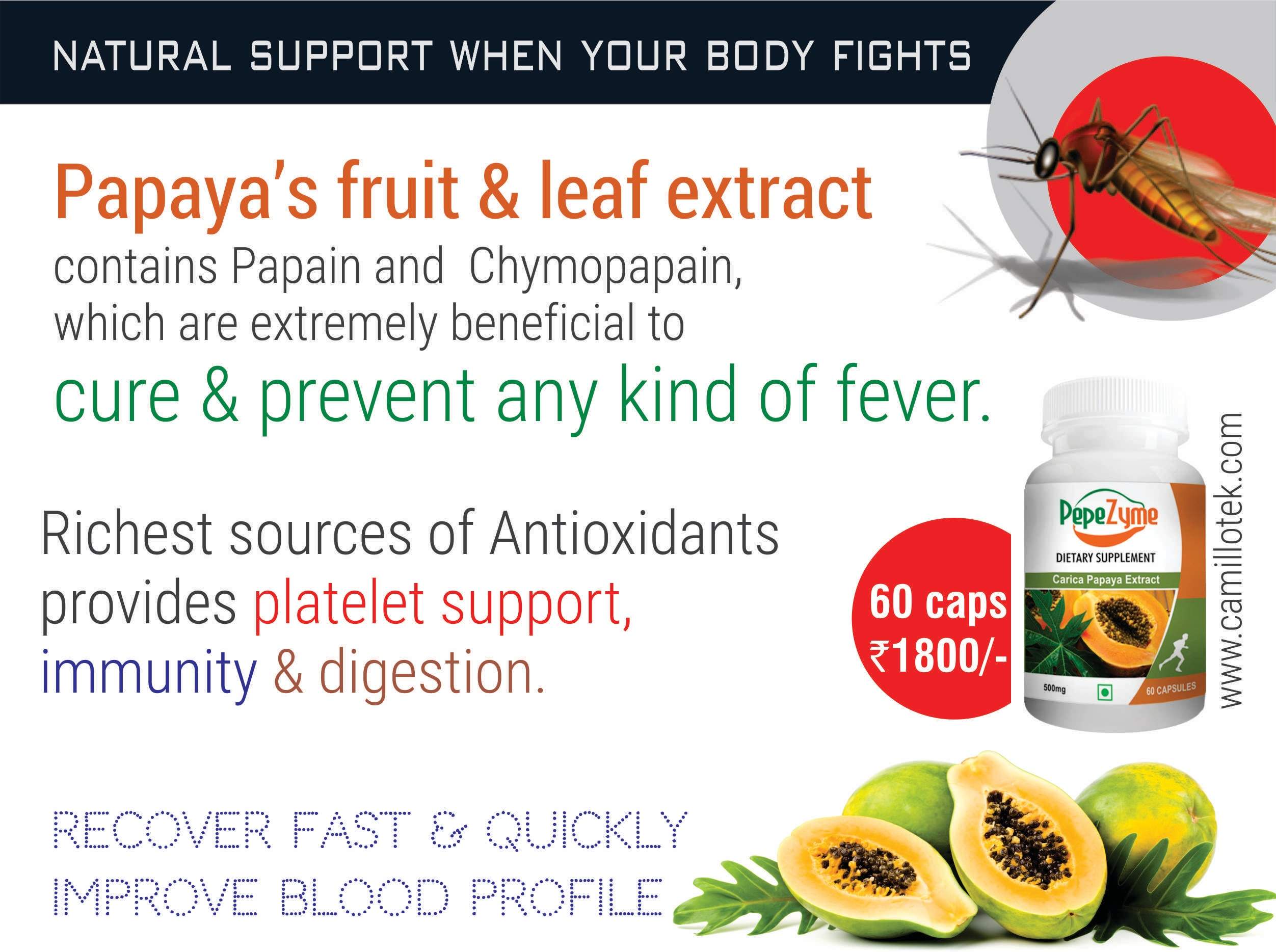 Papaya's fruit & leaf extract contains Papain and Chymopapain, which are extremely beneficial to cure and prevent any kind of fever. Papaya fruit & leaf extract is one of the richest sources of Antioxidants which had many health and wellness benefits including platelet support, immunity and digestion.  Papaya for fever, papaya capsules online, papaya for supplement, papaya for skin, papaya for dengue, papaya for absorption, papaya for platelet count, papya for digestion, papaya for immunity and benefits of papaya.  Papaya capsules manufacturers, Papaya capsules suppliers, Papaya capsules exporters wholesalers, traders in Chennai, India.