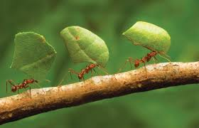 Oldest Pest Control Company in India doesn't mean you are Best Pest Control Solutions provider oldest Pest Control means adapting Modern Pest Control technique so customer can get good quality Pest Control. JustDial Pest Control Experts for Best Pest Control Solutions in Residential and Commercial area Near you. Contact Golden HiCare Pest Control for odourless Pest Control, Golden HiCare Pest Control Expert make sure Pest Control Solutions provided by our Experts Pest Controller is effective to eradicate Pest infestation. reach us for Herbal Pest Control Solutions. Live healthy live in Pest free home in India.