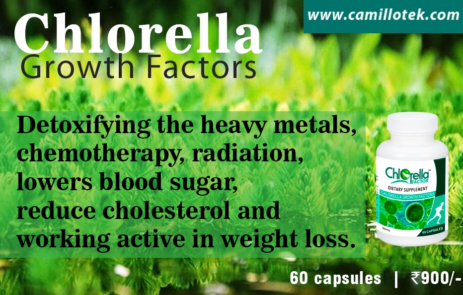 Chlorella capsules are detoxifying the heavy metals, chemotherapy, radiation, lowers blood sugar, reduce cholesterol and working active in weight loss.  Buy Chlorella capsules online, Superfood Chlorella tablets online, green superfood chlorella, chlorella for detoxification, chlorella green algae supplement capsules and Chlorella nutritional tablets.  Chlorella tablets manufacturers, Chlorella tablets suppliers, Chlorella tablets exporters wholesalers and traders in Chennai, India.