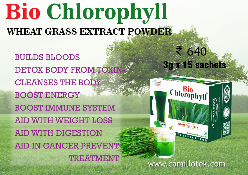 WHEATGRASS HELPS TO BUILDS BLOODS,  DETOX BODY FROM TOXINS, CLEANSE THE BODY,  BOOST ENERGY, BOOST IMMUNE SYSTEM, AID WITH WEIGHT LOSS, AID WITH DIGESTION AND AID IN CANCER PREVENT TREATMENT. Wheatgrass extract online, buy wheatgrass powder online, wheatgrass with mint, chlorophyll wheatgrass powder, wheatgrass juice powder online, wheatgrass green superfood and wheatgrass the antioxidant. Wheatgrass extract manufacturers, Wheatgrass extract suppliers, Wheatgrass extract exporters wholesalers, traders in Chennai, India.