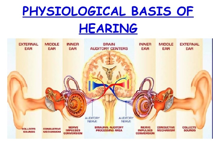 Physiology Of The Auditory System Sound Tra Bsr Hearing Aids And