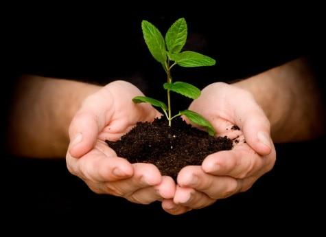 SAVE TREE CAMPAIGN B
