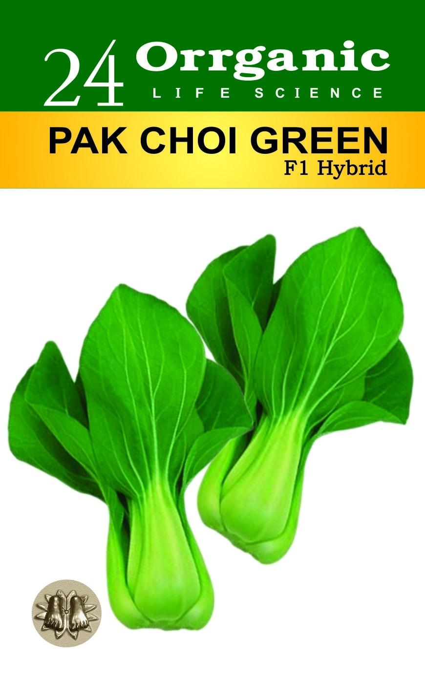 Pakchoi Seeds Suppli