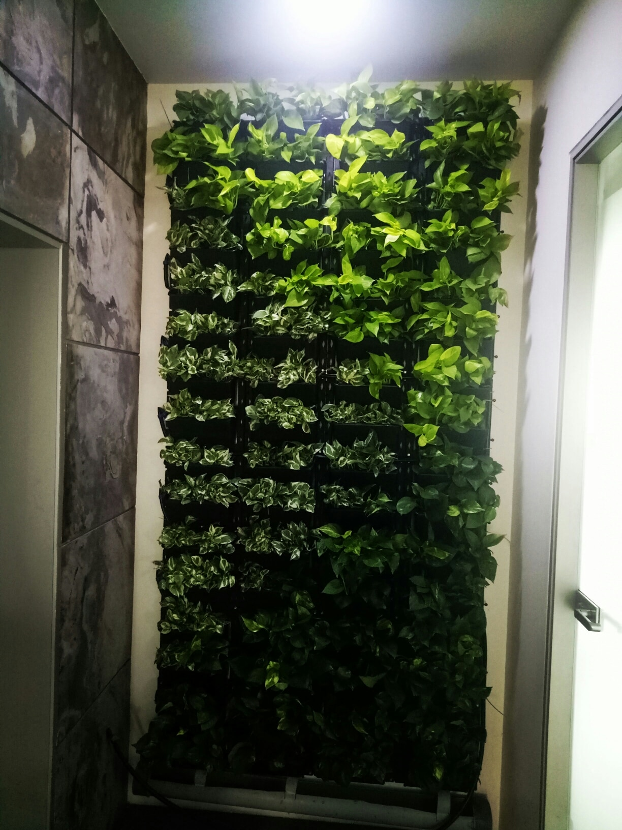 Green Wall Indoor Increase Staff Motivation With Our Green Walls