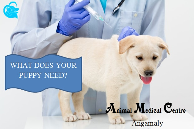 PUPPY VACCINATION - How, When & Why!  Have you protected your puppy against major diseases.  if not, then hurry up. Its raining now. the season is not safe for your puppies unless you Vaccinate them. Get Free Vaccination Advice from the experts.    Animal Medical Centre @Puppy Vaccination at Angamaly. For more info visit us at http://veterinaryhospital.nowfloats.com/PUPPY-VACCINATION-How-When-Why-Have-you-protected-your-puppy-against-major-diseases-if-not-then-hurry-up-Its-raining-now/u18?utm_source=facebookpage