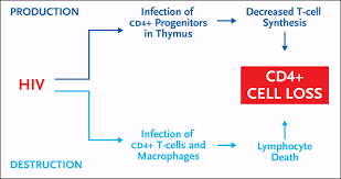 figure shows how cd4