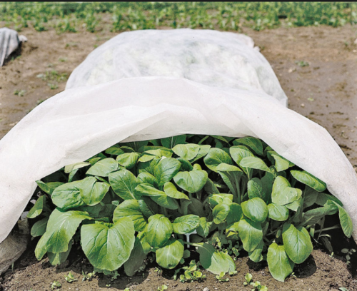 Crop Shield and Crop Cover ManufacturerKeeping the diverse requirements of customers in mind, we are instrumental in providing Crop Shield and Crop Cover.