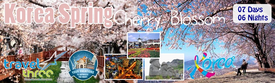 Korea Sping Cherryblossom is out now, GRAB IT FAST! - by Travel Three LLC (USA), Wilmington