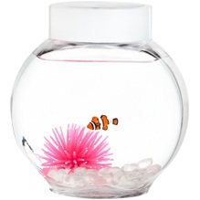 Introducing our latest addition - Nemo ! Salt water fishes and instructions on how to manage this special guy enclosed along with the usual bowl, pebbles etc. The Nemo package available at Rs. 800/- only. - by Gift-a-goldfish, Gurgaon