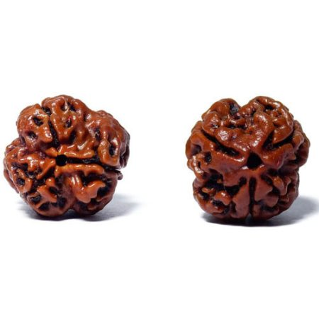 With vast industrial experience in the respective domain, we are offering an unparallel array of 3 Mukhi Rudraksha which is available in various sizes and designs which attract the clients most. It is beautiful as well as effective due to t - by Indo Nepal Rudraksha , Hyderabad
