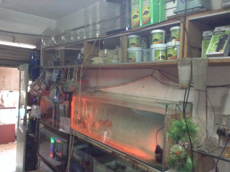 Fish Aquarium available  - by Fun Fish, Ahmedabad