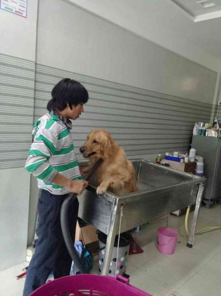 Spa at SNEH PET CLINIC - by Sneh Pet Clinic, Ahmedabad