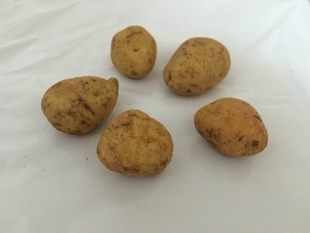 We are leading Supplier of fresh potato in chennai - by Sai Impex, Chennai