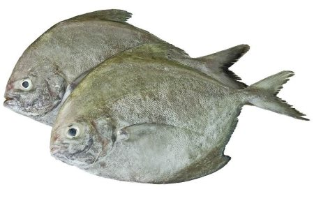 We are providing the Real Fresh Sea Foods in all Chennai - by Jerry Seafoods, Chennai
