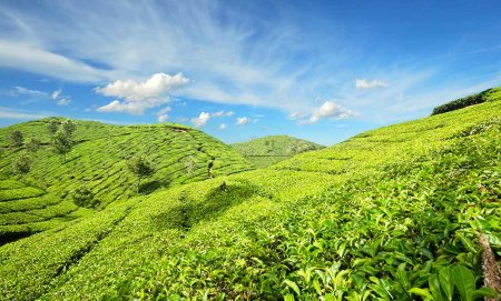 Munnar  If you want to travel down South, you have the sprawling valleys and picturesque tea plantations of Munnar to head to. Located in the Western Ghats in Idukki district, the name Munnar supposedly means 'Three Rivers'. This hill stati - by WORLD TRAVEL CLUB (WTC Tours), Chennai