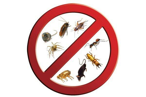 Proffessional pest Control in kodambakkam Chennai - by Spider Pest Controls Pvt Ltd, Chennai