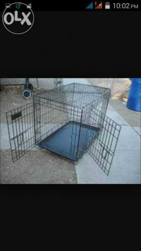 Dog cages at 2100