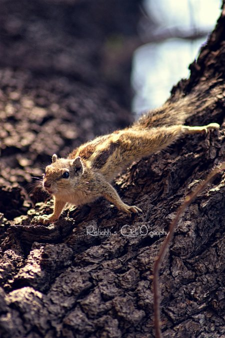 A #squirrel is just a #rat with a cuter outfit! - by Rishabh's Click'O'graphy, Delhi