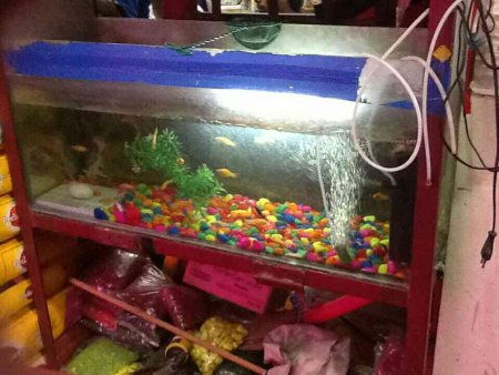 Imported Fish aquarium shop in Nagpur - by Tobbus Pet Shop & Aquarium, Nagpur