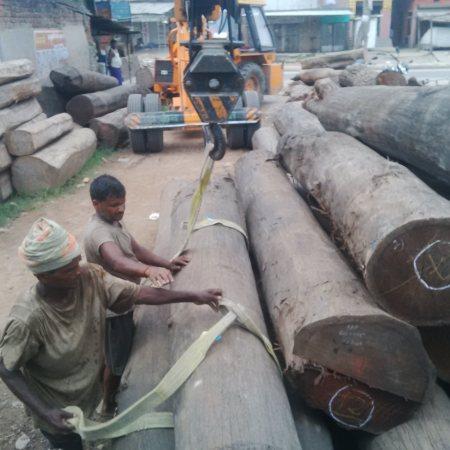 Raipur Sakhua logs... - by Suraj saw mill, Patna