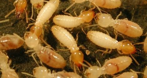 Pest Control Company |Termite Treatment Company | Pest Control Services |Pest Control Treatment |Pest Control Treatment Company in Noida |Termite Control Company in Noida | Termite Control Treatment Company in Noida  - by Pestcontrolnoida, Gautam Buddh Nagar