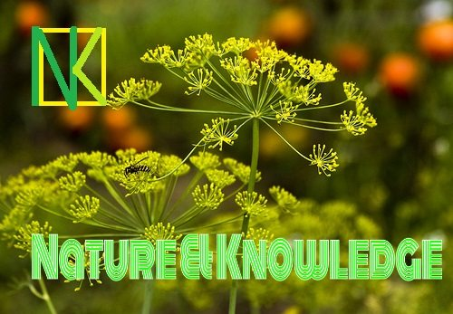 N& K helps you to know the Nature and it's useful facts - by NATURAL KNOWLEDGE, Kolkata