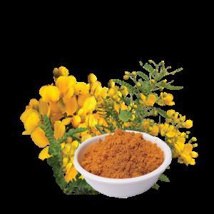 GCT Avarampoo Powder - by Vindhya Herbals  - Health from Wild Wealth, Mysore