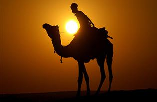 Camel Safari in Dunes: Families and couples can enjoy fun camel rides which will make their trip memorable. - by Hotel Prince & Resort, Jaisalmer