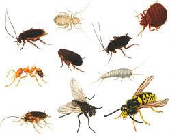 Best commercial pest control services   - by Acuity Pest Control, Bangalore