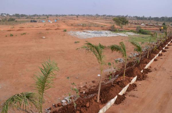trees kept - by Space Vision Group, Hyderabad